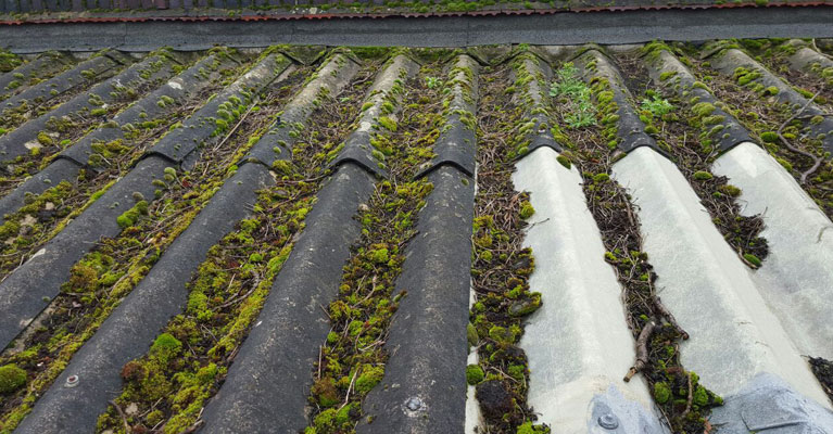 A wider view of the roofing moss accumulating.